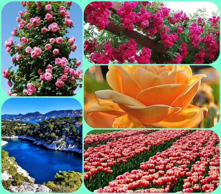 Dite le avec des fleurs ------- Un bon mercredi et de gros bisous de Pierre Paul