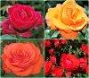 C'est en croyant aux roses qu'on les fait éclore  ( Anatole France )