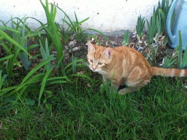 BONUS: Mon chat