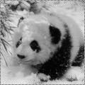 Pack #2 d'Animaux en hiver