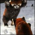 Pack #7 d'Animaux en hiver (2)