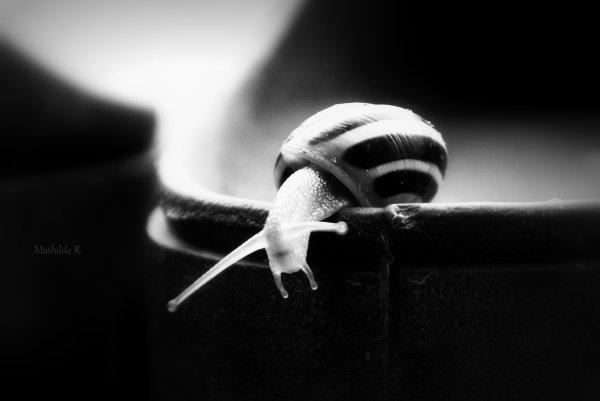 Petit escargot...