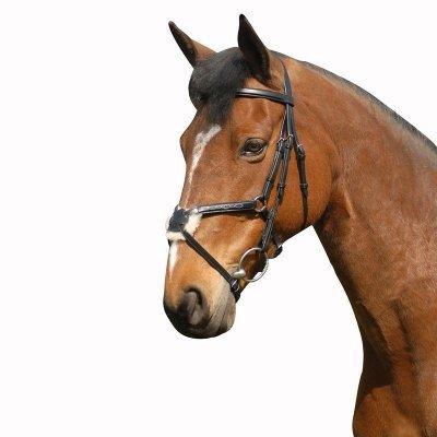 A la recherche de materiel d'equitation
