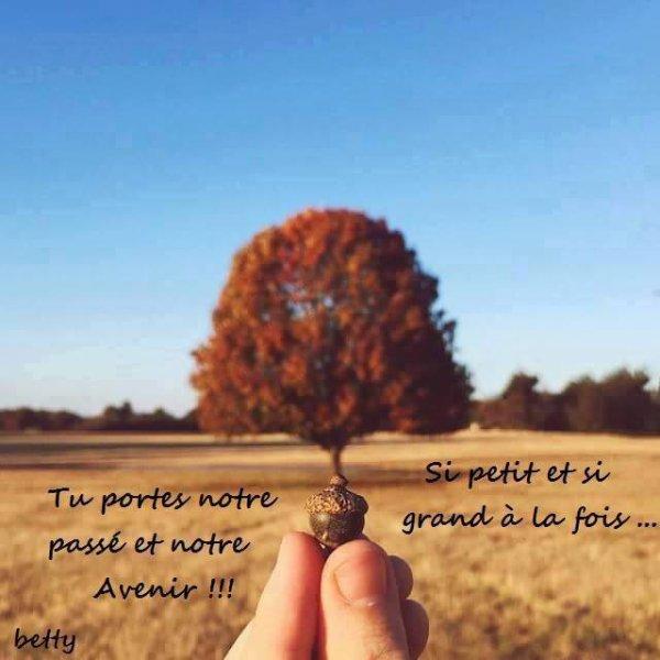 l arbre de vie!!!!!!!!!!!!!!!!!!!!