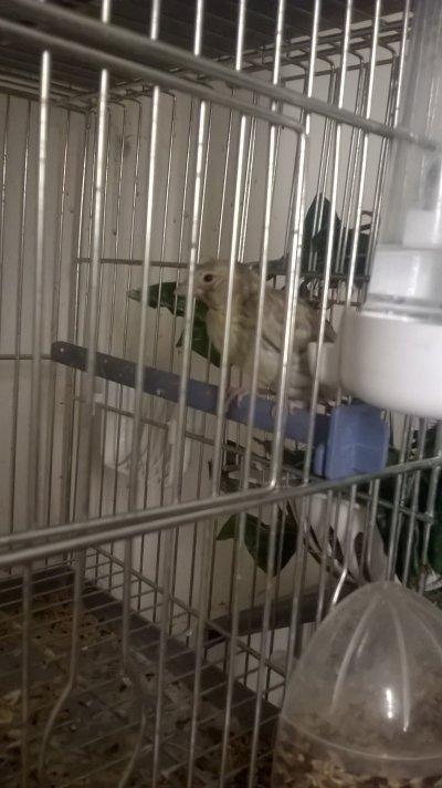 Premier sorti du nid