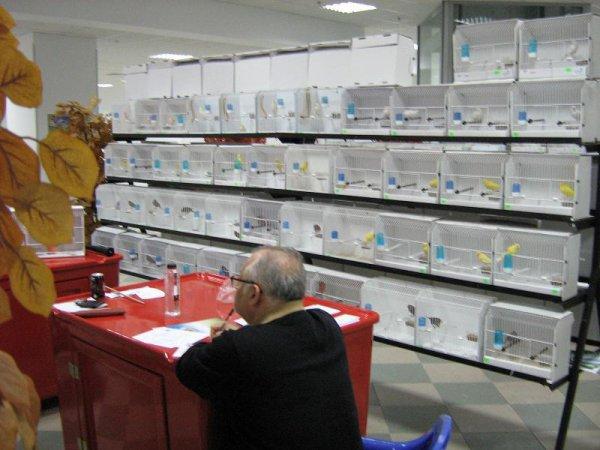 Exposition en Roumanie 2012