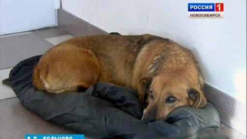 Ce chien attend depuis un an, à la sortie de l'hôpital, son maître décédé