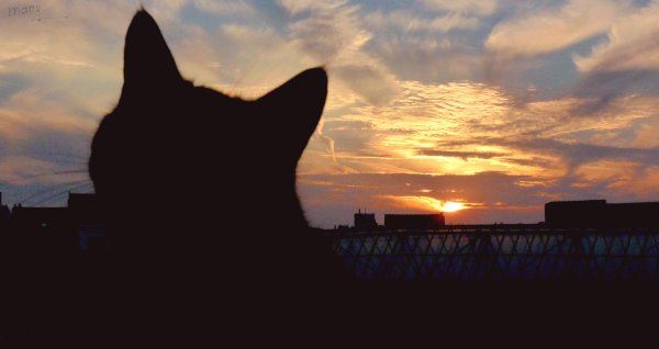 Cat's sunset