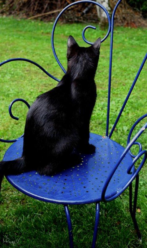 Chat de la Chaise.