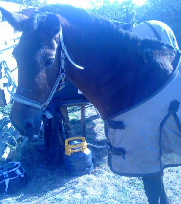 Aprennez a écouter ce que votre cheval vous murmure à l'oreille