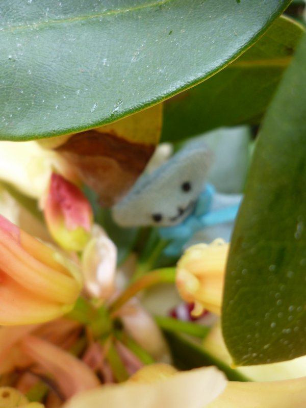 Trouvé dans mon Rhododendron!