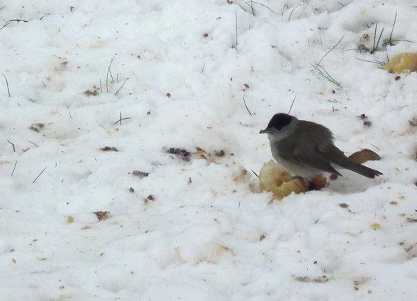 Gentils oiseaux