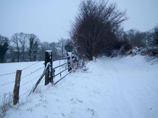 Quelques images du jour sous la neige