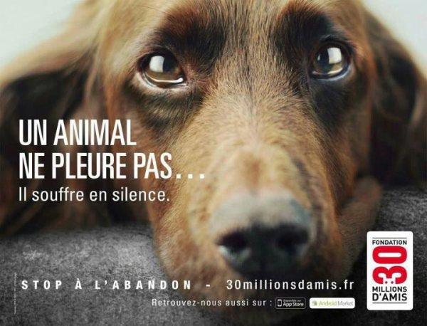 un animal pleure pas mais souffre en silence soyez respectable avec les animaux se ne sont pas des jouet!!