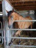 Photo de races-de-chevaux64