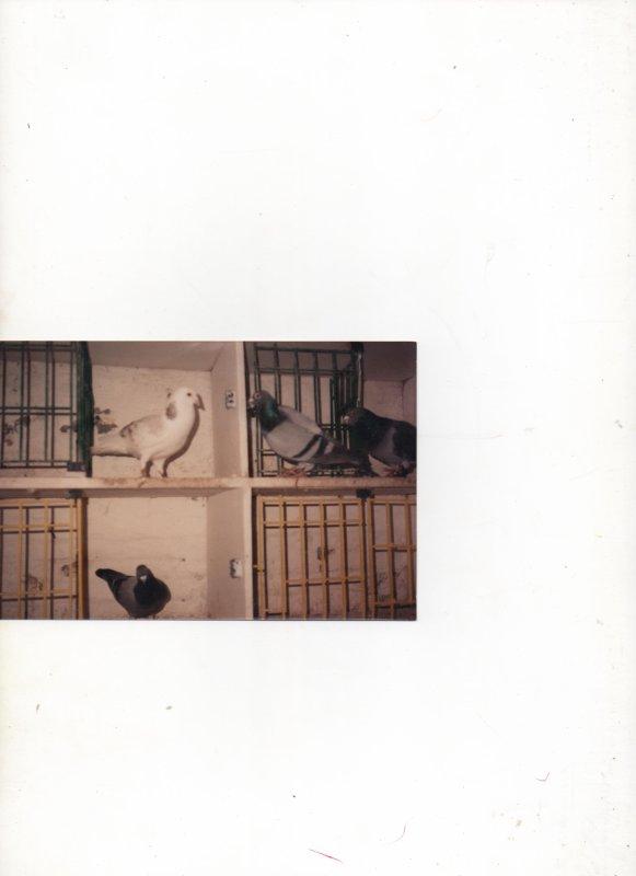 ,le 109592/1984.et mon blanc de 86