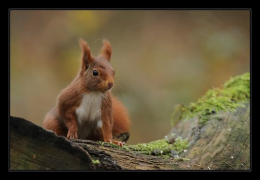 P'tite série écureuil
