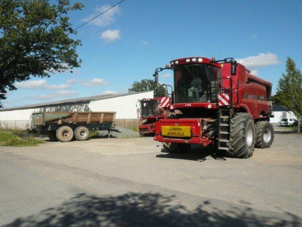 battage blé 2012  avec CASE ih 8120 coupe de 9 m