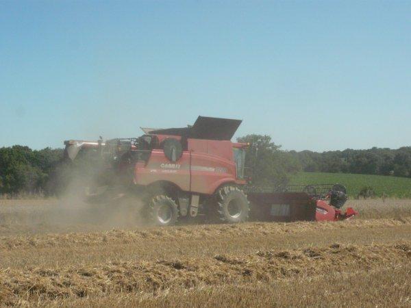 battage blé 2012 avec CASE ih 8230 coupe de 9 m
