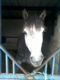 Photo de Nenou-Poney