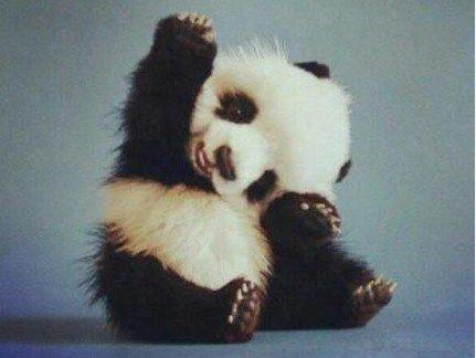 Hello,I am a baby panda
