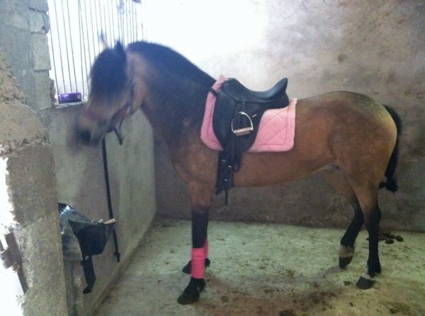 Tapis samantha rose + bande de polo jumptec