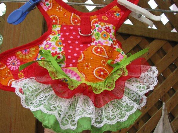 petite robe harnais , super joli :-)