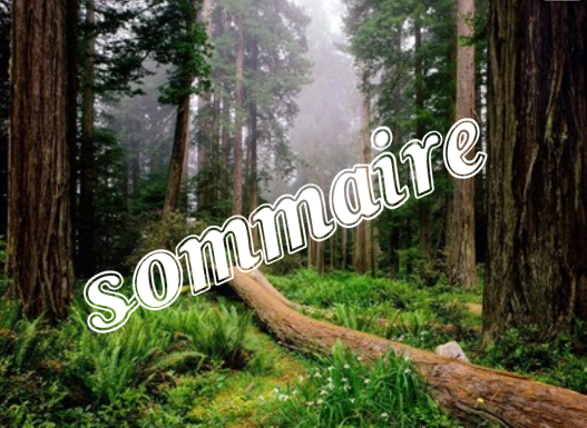 Sommaire : live or die