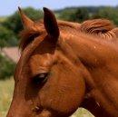 Photo de world-equitation