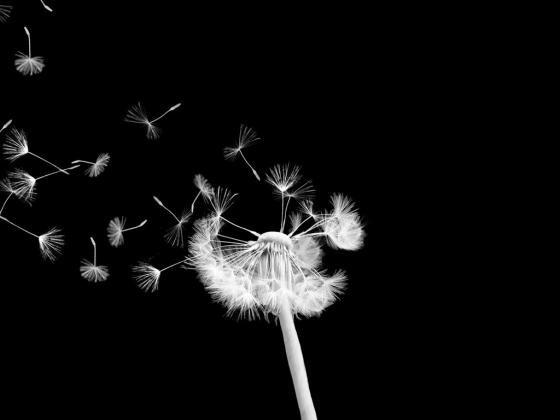 Les morts reçoivent plus de fleurs que les vivants car les remords sont plus forts que la gratitude #Batman