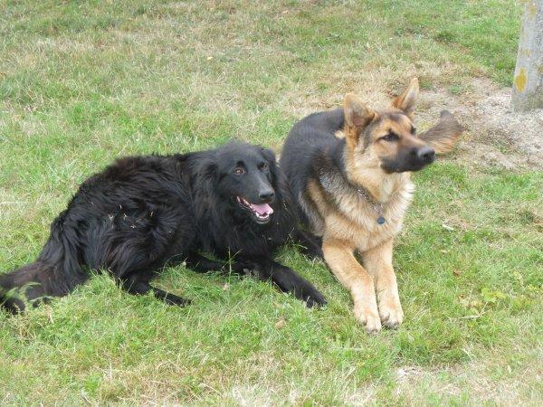 mes amours de chiens