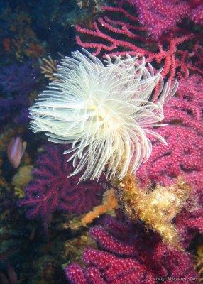 plante sous marine
