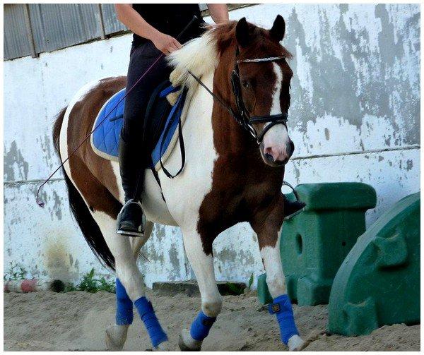 Je t'aime poney ♥