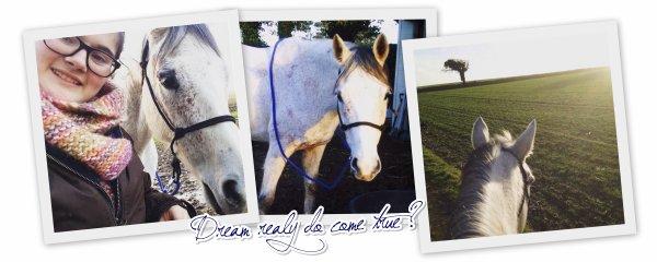 Pour s'ouvrir aux chevaux et à ce qu'ils peuvent nous apprendre il faut remballer son ego.
