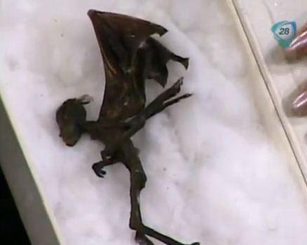 Un cadavre de fée retrouvé