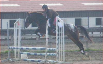 « L'homme et le cheval sont dans deux mondes différents ! Ce qui compte,ce n'est pas la méthode employée mais la façon d'aborder les choses. »