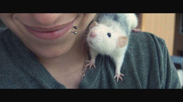 Les animaux sont bien plus sympatique que les humains.  ~ • Les Amoures de ma Vie .. • ~
