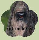 Photo de relincho-x