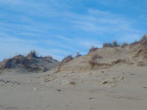Nos dunes après l'hiver