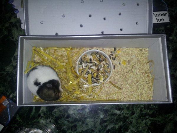 # 16 25/10/2012 : Inquiétude pour un petit animal qui prend tellement de place dans mon c½ur.