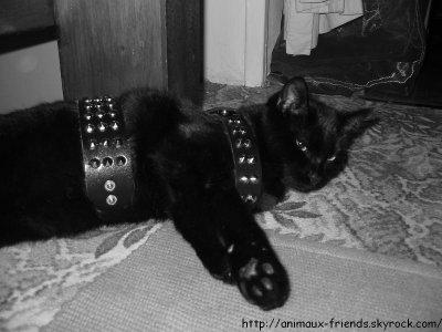 Le dégriffage des chats
