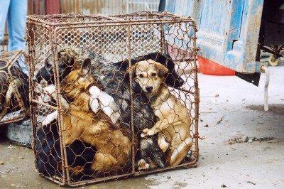 Les chiens en Chine