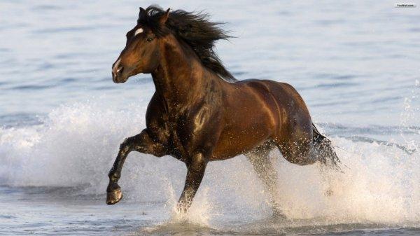 cheval a la mer