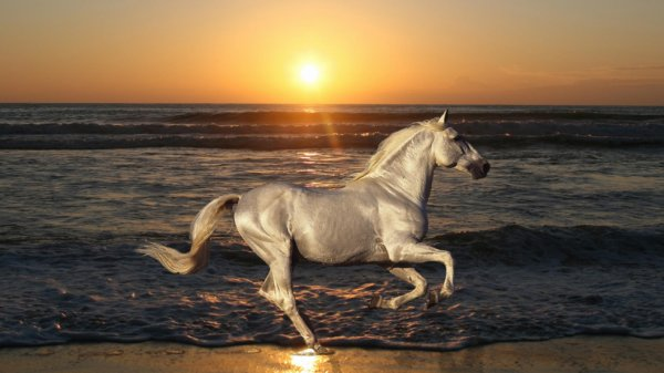 photo cheval a la mer