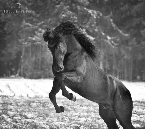 horse ruade