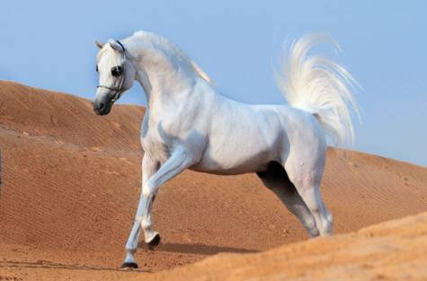 psa blanc dans le desert