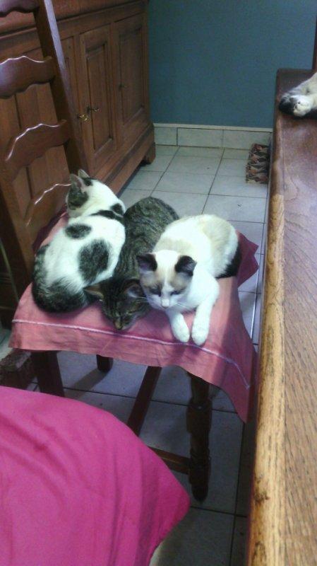 les chats d'un ami