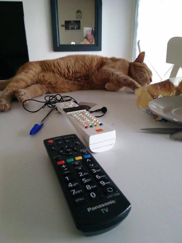 prosper mon ancien chat , il me manque beaucoup