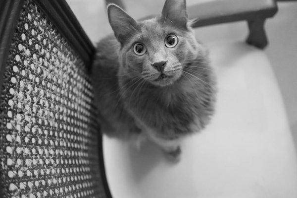 quel beau chat
