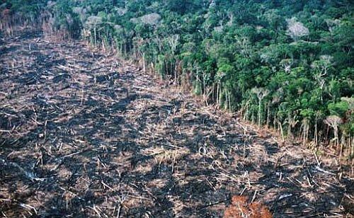 La déforestation de l'Amazonie